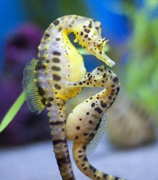 Самые маленькие животные в мире фото - Морской конек
