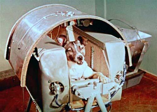 Самые известные животные в мире - собака по кличке Лайка
