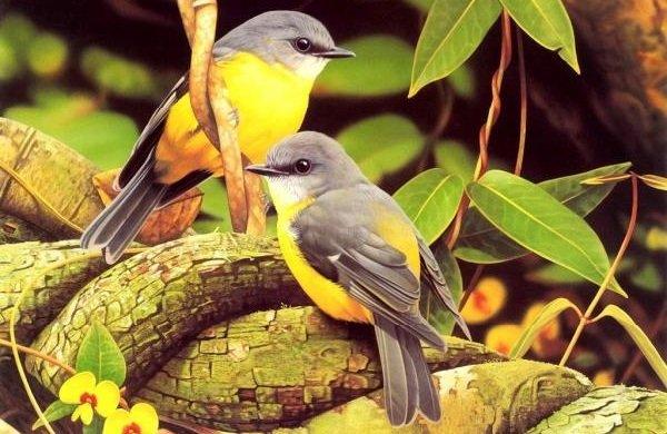 Факты о птицах — фото и описание самых интересных