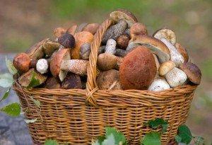Грибы - 20 интересных фактов про грибы