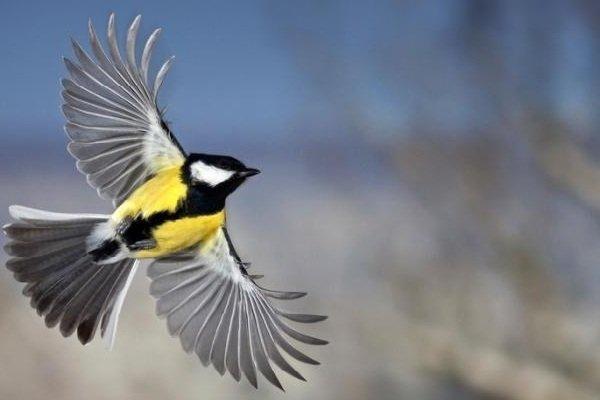 Факты о птицах - фото и описание самых интересных - стук сердца