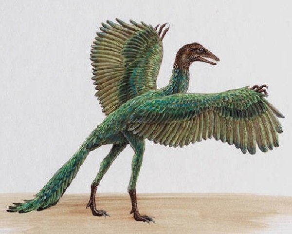 Доисторические животные фото самых странных - Археоптерикс