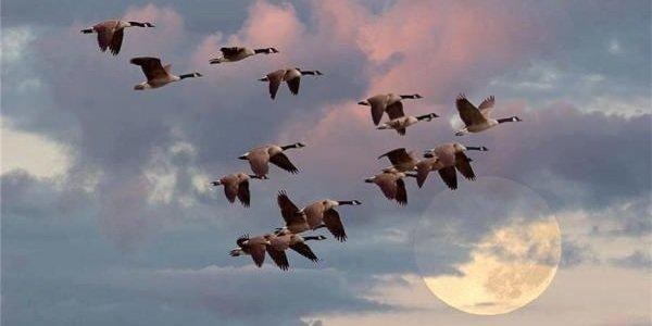 Факты о птицах - фото и описание самых интересных - клинья