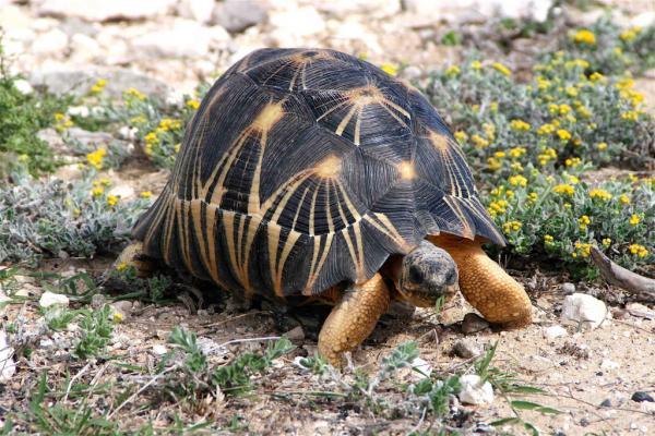 Самые хитрые животные фото и описание - Черепахи