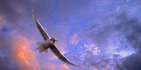 Факты о птицах - фото и описание самых интересных - скорость полета птицы
