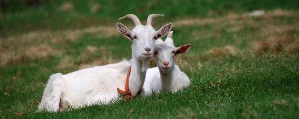 Интересные факты о животных - ошибочные мнения людей про колов отцов