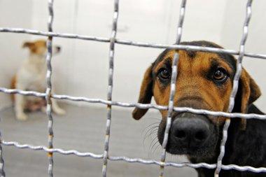 Эксперименты над животными фото и описание - щенок с током