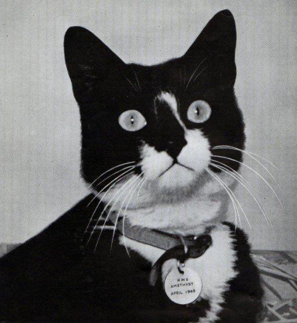 Самые известные животные в мире - Кот Сэм