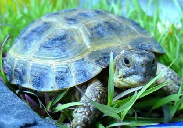 Животные долгожители фото и описание - Сухопутная черепаха