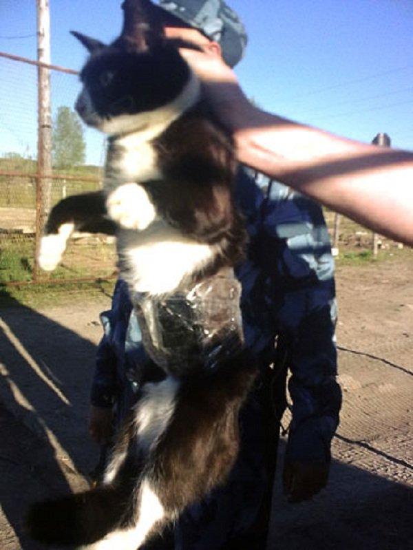 Животные преступники - арестованы полицией фото - Кот контрабандист