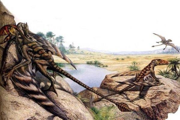 Доисторические животные фото самых странных - Диморфодон