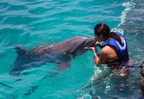 Эксперименты над животными фото и описание - Секс дельфина с человеком