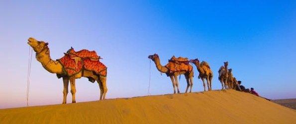 Интересные факты о животных - ошибочные мнения людей - верблюды-то не потеют!