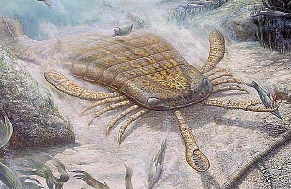 Доисторические животные фото самых странных - Джекелоптерус
