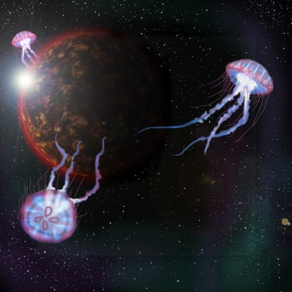 Эксперименты над животными фото и описание - Медузы в космосе