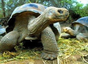 Про черепах интересные факты