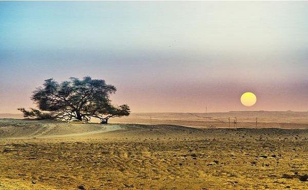 Необычные деревья и самые странные фото - Дерево Жизни