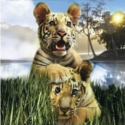 Лучшие фильмы про животных - Два брата