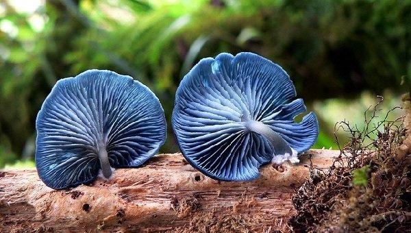 Необычные грибы и фото самых интересных