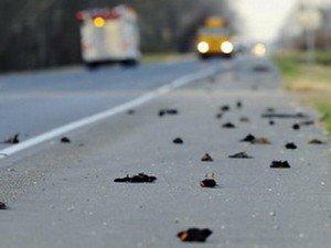 Массовая гибель животных - черные дрозды