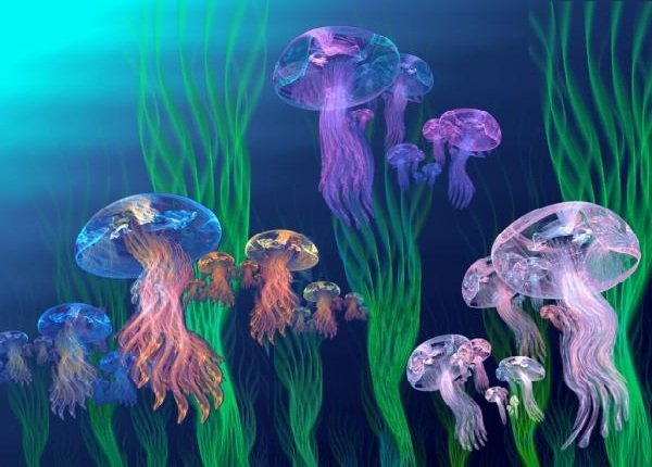 Медузы морские — интересные факты