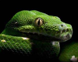 Змеи - интересные факты - удивительно!