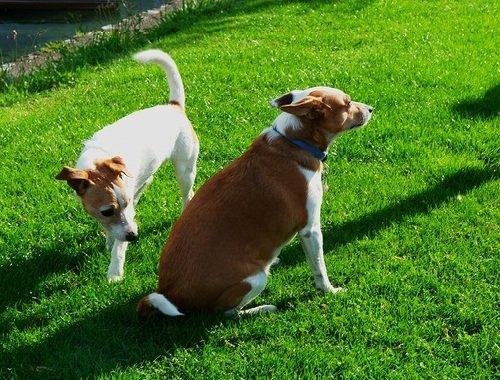 знакомство собак в израиле
