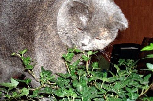 Запахи в жизни животных - кошки