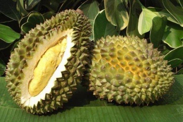 Экзотические фрукты фото и описание - Дуриан