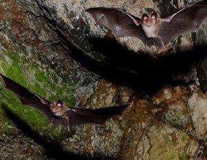 Массовая гибель животных - летучие мыши