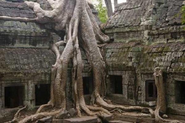Необычные деревья и самые странные фото - Шелковое дерево