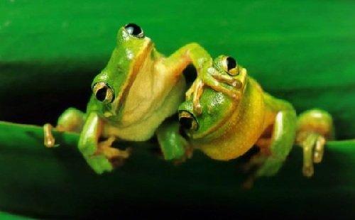 Запахи в жизни животных - лягушки