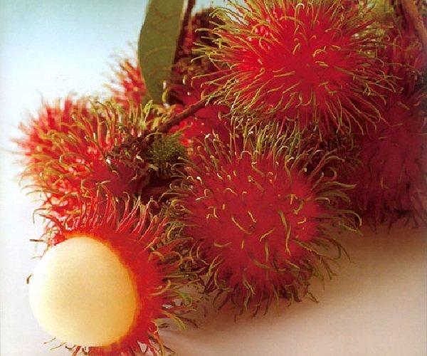 Экзотические фрукты фото и описание - Рамбутан