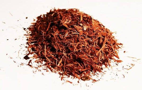 Растения афродизиаки фото описание - Катуаба