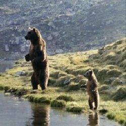 Лучшие фильмы про животных - Медведь