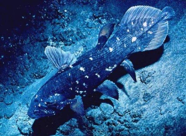 Животные - которых считали исчезнувшими - Латимерия