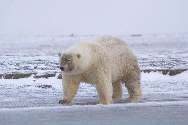 Животные гибриды фото и описание топ 10