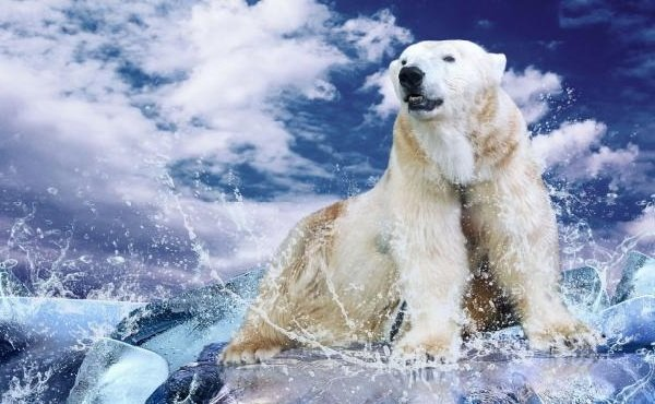 Животные белого цвета - Полярные медведи