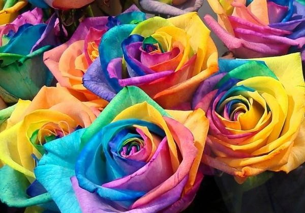 Самые дорогие цветы в мире - Радужная Роза