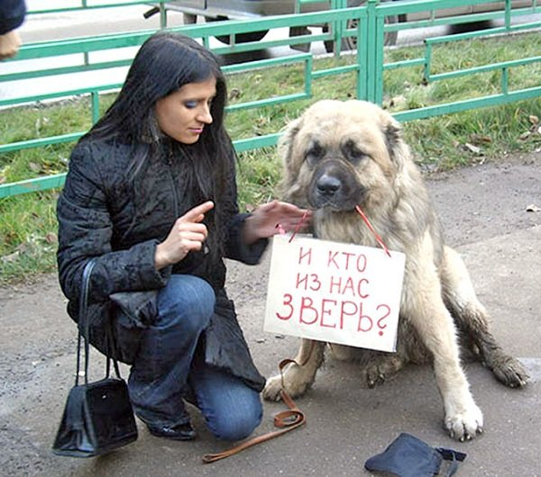 Бездомные животные — лицо нашего общества!