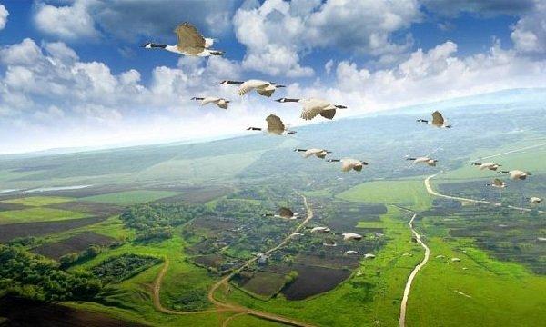 Миграция птиц понятна или загадочна?