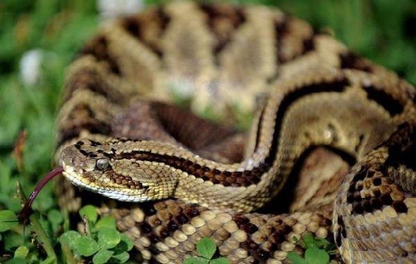 Экзотические домашние питомцы - Змеи