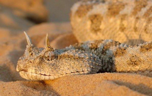Животные пустыни — выносливые и трудолюбивые