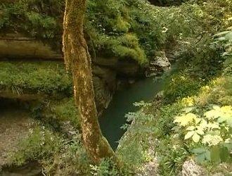 Деревья Кавказа — реликтовые долгожители!