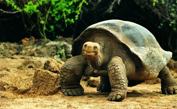 Самые медлительные животные в мире - Черепахи