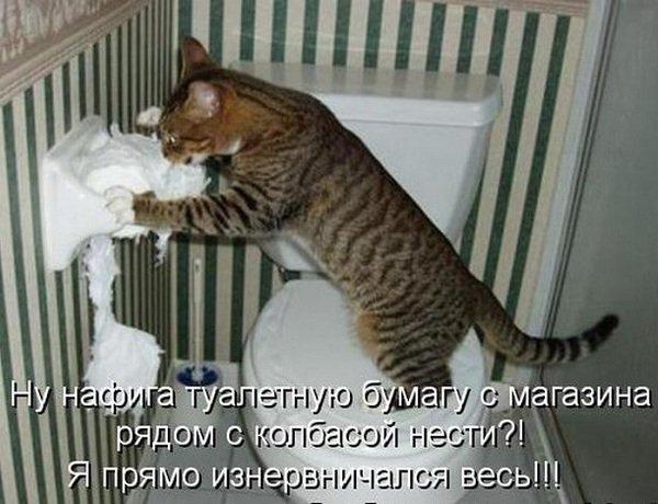 Кот метит территорию — как отучить кота гадить