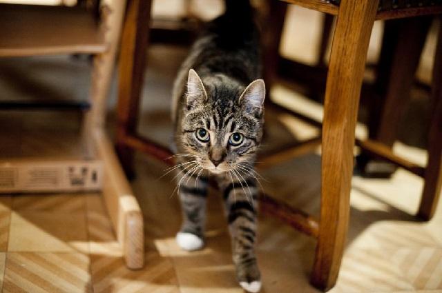 Кот метит территорию – как отучить кота гадить?