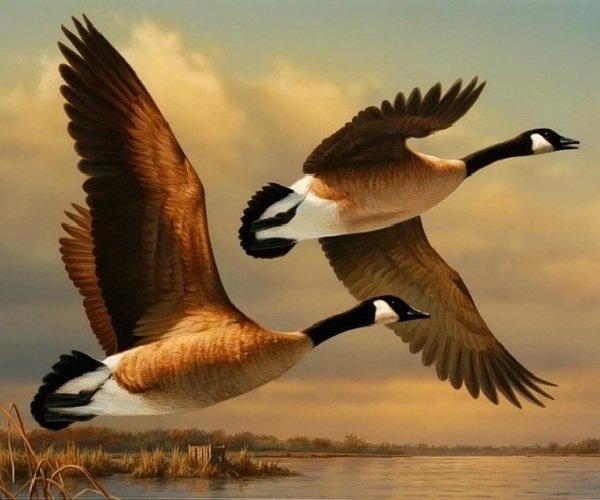 Миграция животных и птиц — проблемы 21 века