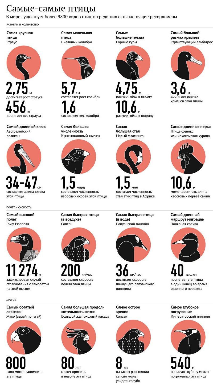 Рекордсмены среди птиц — самые-самые