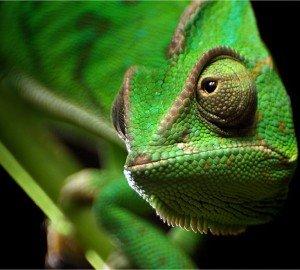 Рептилии - удивительные мастера маскировки!